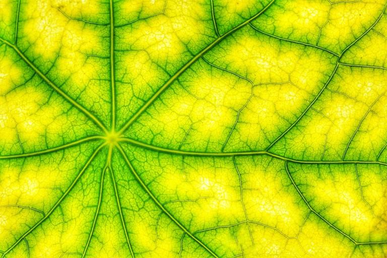 photosynthesis-4543260_1920
